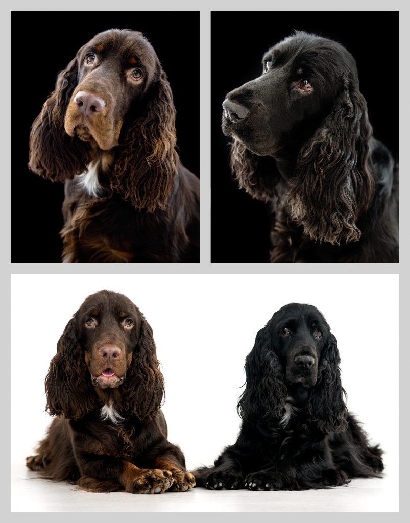 2 hundar i studio
