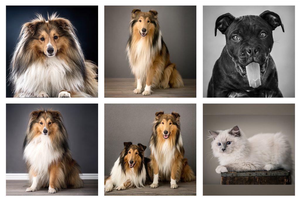 6 bilder på husdjur