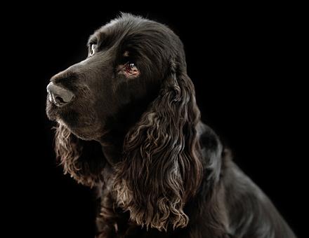 Hundfotografering, studio